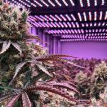 high end marijuana store